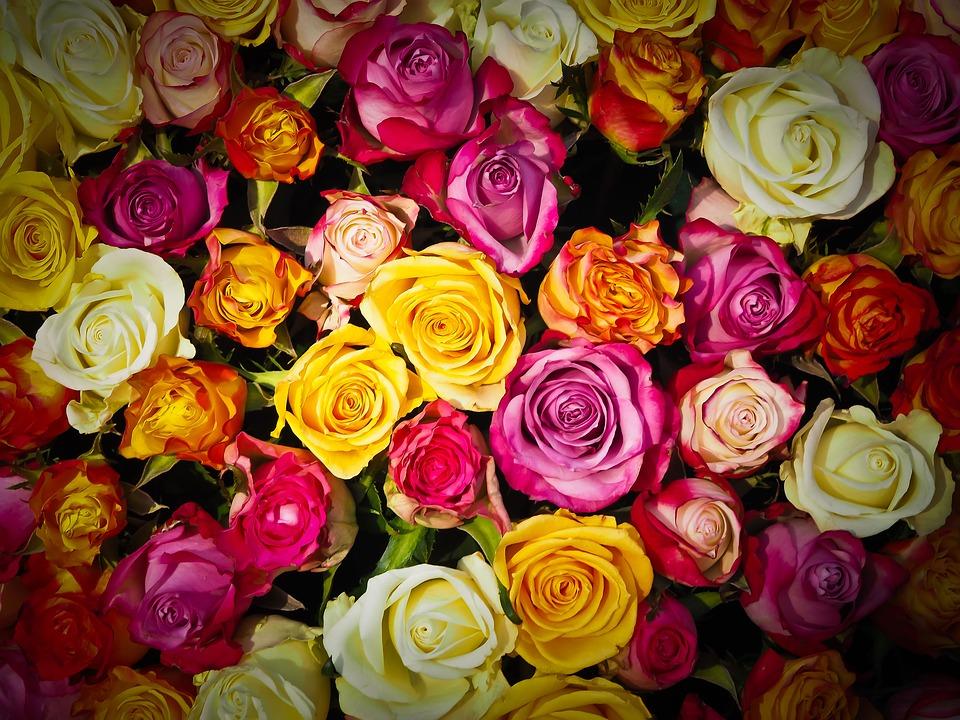 Kwiaciarnia Radom
